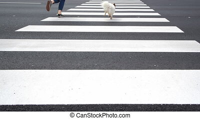 4K - Dog with owner running along a pedestrian crossing