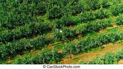 4k, ferme, agriculture, couple, vert