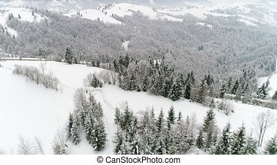 4K. Flight above Ukraine winter forest, aerial top view. -...