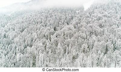 4K. Flight above Ukraine winter forest, aerial top view. - ...