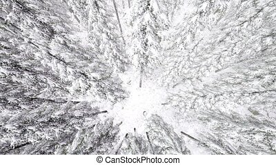 4K. Flight above winter forest on the north, aerial view