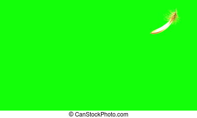 4K. Flying Golden Feather. Green Screen. Seamless Looping. 3D Animation. Ultra High Definition 3840x2160