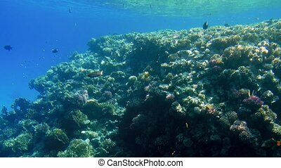 4k footage of beautiful ccolorful coral reef in the red sea....