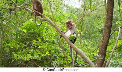 4k footage of wild monkey eating food from plastic bag she ...