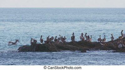 4K Incredible wildlife footage of Pelicans feeding off a...