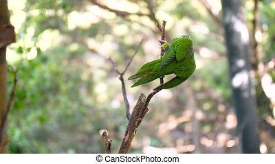 4k, jeden, papugi, posiedzenie, video, dwa, muchy, drzewo, ...
