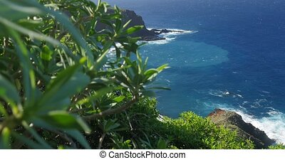 4K, Jib view over Caleta De La Hoya Beach, La Palma, native...