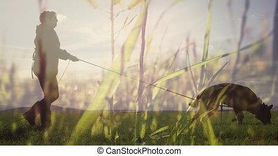 4k, marche, herbe, sien, homme, chien