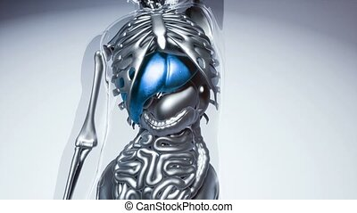 human liver model with all organs and bones - 4K medical...