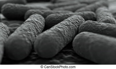 4K Microscopic view of a bacteria colony. Medically accurate...