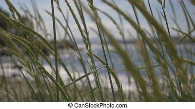 4K, Norway, Seaview through weed - Nature Of Norway,...