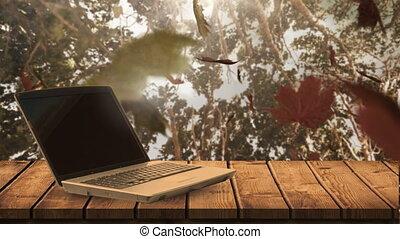 4k, ordinateur portable, feuilles, tomber, automne