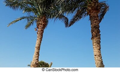 4k panning video of high palm trees on the beach at bright...