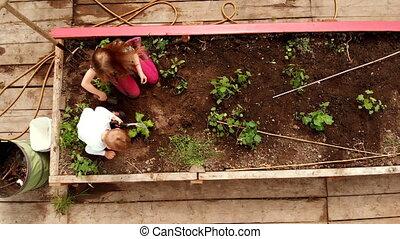 4k, planter, frères soeurs, jardin