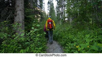 4k, randonneur, dense, couple, vue, forêt, chemin, arrière,...