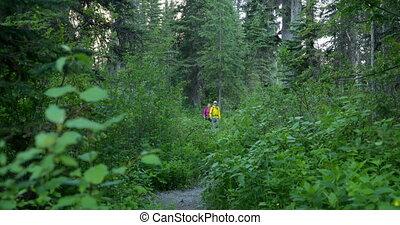 4k, randonneur, dense, couple, vue, forêt, chemin, marche,...