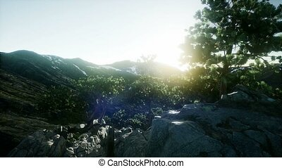 4k Scandinavian landscape. Several lonely pines on a rock....