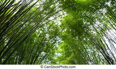 4K Scenic fresh nature green bamboo forest tunnel