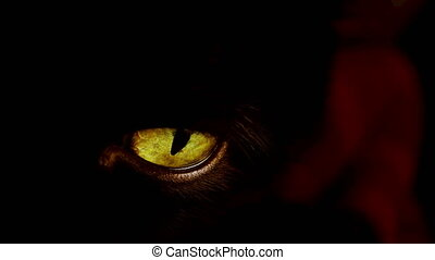 4K shot of a black cat with extremely yellow eyes. - Highly...
