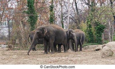 4k shot of an elephant family in Berlin zoological garden.