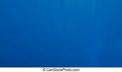 4k slow motion underwater video of sun rays shining through...