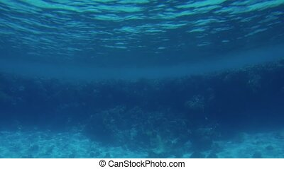 4k slow motion video of camera moving over coral reef on the...