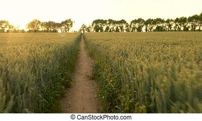 POV video clip of runner running on path through field of...