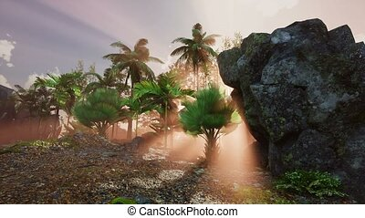 4K Sunset beams through Palm Trees at jungle rainforest