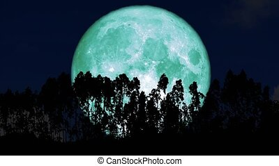 4k super aqua moon rise back on silhouette line fence of pine trees