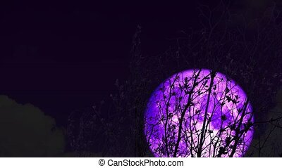 4k Super purple moon rise back on silhouette dry tree on the night sky