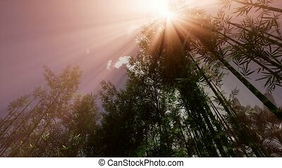 4K The sun's rays make their way through the bamboo grove