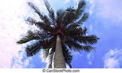 4k Time lapse of green palm tree on blue sky background