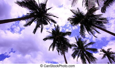 4k Timelapse palms at blue sky background  with clouds.