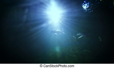4K Under water with light and fish swimming