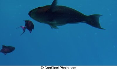 4k underwater footage of beautiful fishes swimming in the...