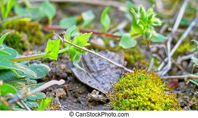 4k, vert, macro, champ herbe