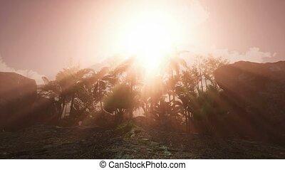 4k Vibrant colors palm trees summertime beach sunset