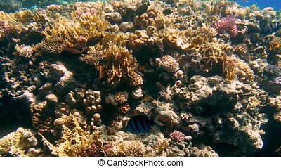 4k video from illuminator of submarine of colorful coral...