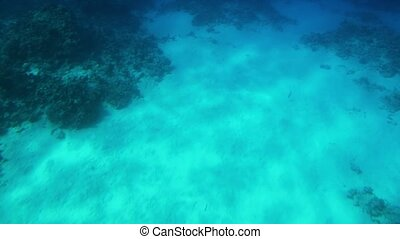 4k video made from the submarine of beautiful underwater landscapes. Coral reef and swimming tropical fishes