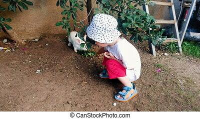 4k video of adorable 2 years old toddler boy feeding rabbit...