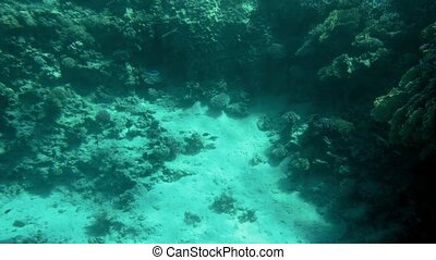 4k video of beautiful coral reefs on the sea bottom....