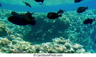 4k video of beautiful seascape of coral reef in REd sea....
