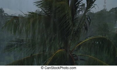 4k video of camera focusing on palm tree in the jungle ...