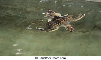 4k footage of injured turtle with damaged shell after mutation swimming in water pool at wildlife rescue center