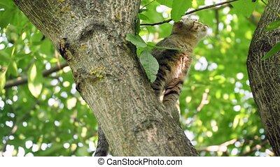 4k video of little grey kitten sitting on high tree branch ...