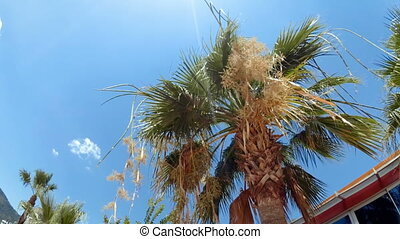 4k video of of palm tree top at bright sunny day - 4k...