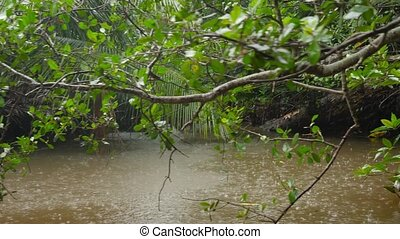 4k video of raining in the tropical jungle overgrown with mangrove trees