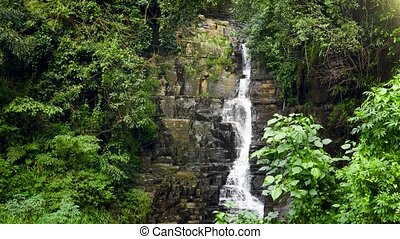 4k video of small water stream flowing in waterfall in tropical jungle forest of Sri Lanka