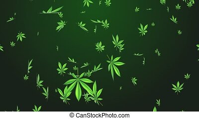 4K Weed Cannabis Drug leaves rain Falling Loop Animation green screen. leaf marijuana rotating Background. Cultivating marijuana. recreational drugs, Marijuana, weed, herb, leaf, ganja, sativa, joints