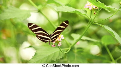 4K - Zebra Butterfly